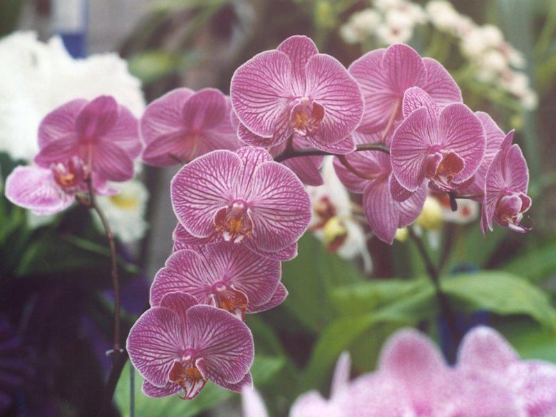 Madison Wi Orchid Quest